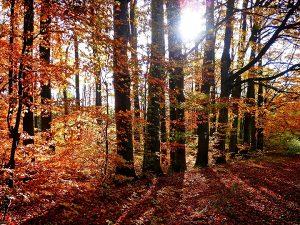 Metsäkerhon retki Paimion seurakunnan leirikeskukseen ma 5.11.