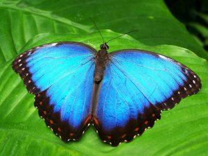 Liian paksu perhoseksi pe 12.7.