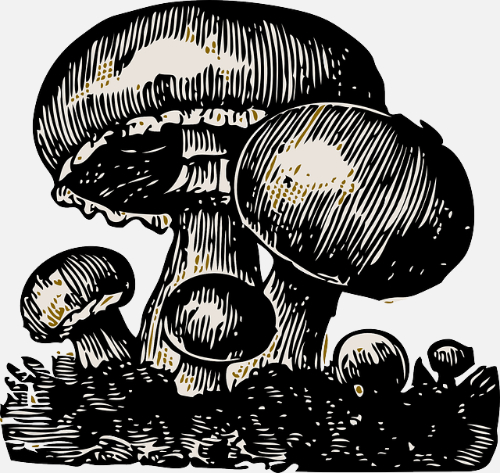 Sieniretki Kuhankuonolle keskiviikkona 20.10.
